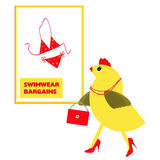 Spring Chicken searching for holiday, vacation swimming costume Stock Photos