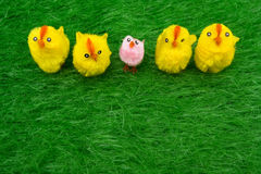 Spring Chickens Royalty Free Stock Images