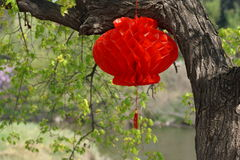 Spring in China. Red Chinese lantern on tree Stock Photos