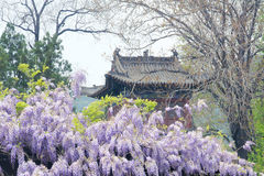Spring Chinese garden Stock Images