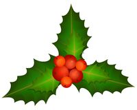 Spring of Christmas Holly Stock Images