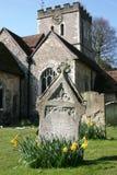 Spring in a churchyard. Daffodils brighten an English churchyard at Welwyn Stock Photography