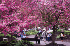 Spring in a city. Stock Photography