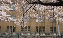 Spring in the city Stock Photography