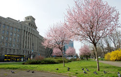 Spring in a city Stock Photo