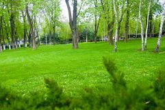 Spring city Park - blooming flower and trees, bright green grass. Sunlight royalty free stock photo