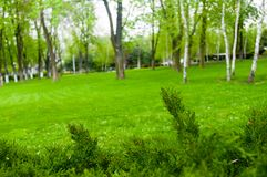 Spring city Park - blooming flower and trees, bright green grass. Sunlight stock photography