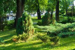 Spring city Park. Blooming flower and trees, bright green grass, sunlight stock images