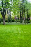 Spring city Park - blooming flower and trees, bright green grass. Sunlight royalty free stock image
