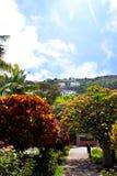 Spring city park in Madeira Stock Photos