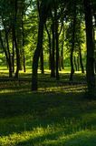 Spring city Park. Blooming flower and trees, bright green grass, sunlight stock photo