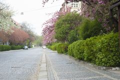 Spring city street in bloom. Royalty Free Stock Images