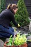 Spring cleaning in garden. Woman is doing spring cleaning in garden Royalty Free Stock Images