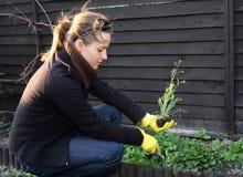 Spring cleaning nel giardino Immagini Stock Libere da Diritti