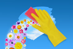 Spring cleaning. Yellow glove with pink sponge cleaning surface while spring flowers come out Stock Images
