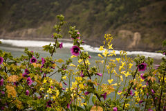 Spring close up of blooming colorful flowers with ocean in background. On atlantic coast, san juan de gaztelugatxe, basque country, spain Royalty Free Stock Photos