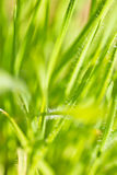 Spring close up of colorful green grass and flowers in sunlight outdoors Royalty Free Stock Photography