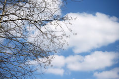Spring Clouds and Tree Stock Image