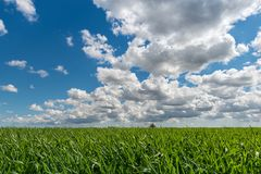 Cloudy sky over grain field Stock Photo