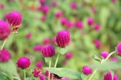 Spring clover garden Stock Images