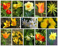 Spring collage stock images