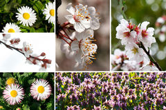 Spring collage Stock Photography