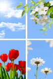 Spring collage Stock Photos