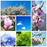 Spring collage Royalty Free Stock Photo