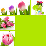 Spring collage. Collage of different flower pictures Royalty Free Stock Images