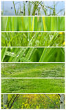 Spring collage Royalty Free Stock Photos