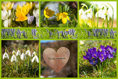 Spring collage Stock Photo