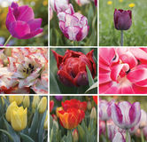 Spring Collage of colourful tulips. Square floral collage. Postcard royalty free stock images