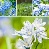 Spring collage Stock Photos