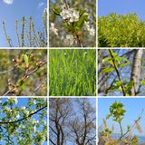 Spring collage with first green leaves, grass and white flowers of cherry and apple tree stock photos