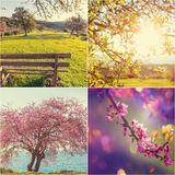 Spring collage Stock Image