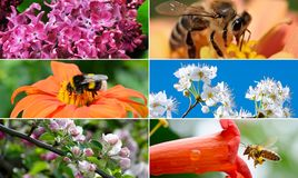 Spring collection with flowers, insects, fruit trees. Royalty Free Stock Photography