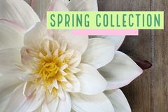 Spring collection royalty free stock images