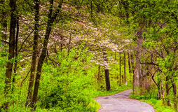 Spring color along a road through a forest in Lancaster County C Stock Photos