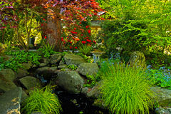 Spring Color, Botanical Garden, Washington Stock Image
