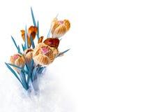Spring color crocus flower bouquet Stock Photos