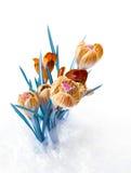 Spring color crocus flower bouquet Stock Images