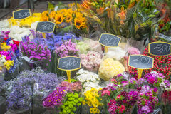 Spring color flowers for sale on market. Royalty Free Stock Photo