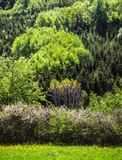 Spring color of the forest. Illustration, atmosphere stock images