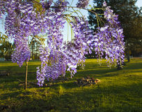 Spring color Stock Photography