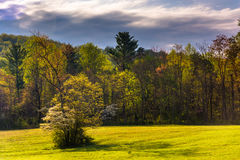 Spring color in the Shenandoah Valley, Virginia. Stock Image