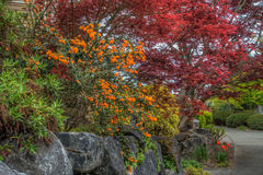 Spring Color Splash. A view of Spring flowers in West Seattle, Washington. HDR image Royalty Free Stock Photography