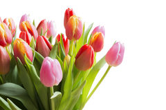 Spring color tulips Royalty Free Stock Photo