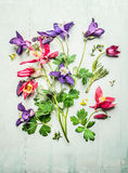 Spring colorful garden flowers, columbines or akelei. Composing on light wooden background, top view Stock Photo