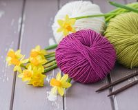 Spring colorful wool yarn with knitting needles and yellow daffodils. With a copyspace Royalty Free Stock Images