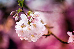 Spring colors Royalty Free Stock Photos